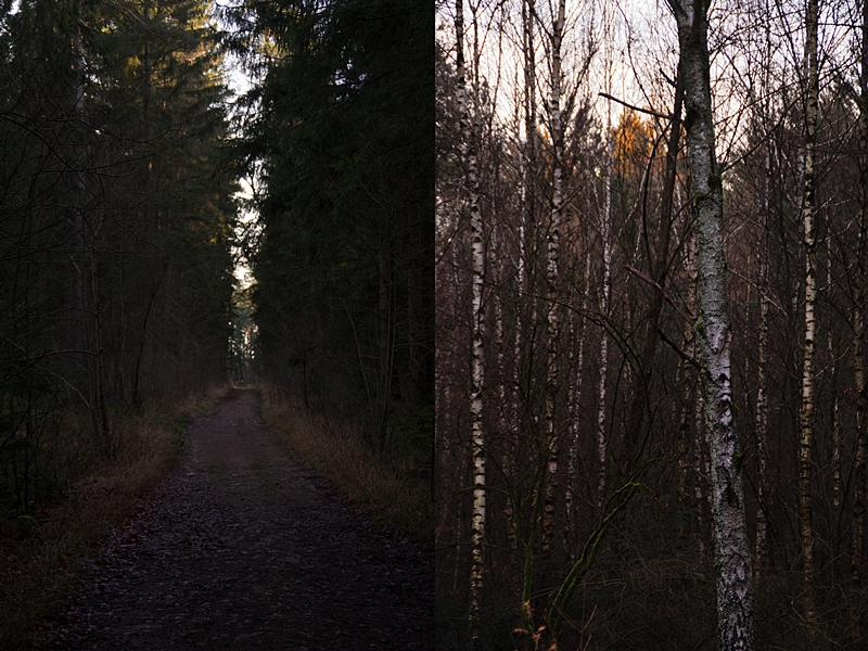 Dunkler, stimmungsvoller Winterwald