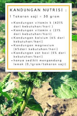 Kandungan nutrisi Amaranth dan efek samping amaranth