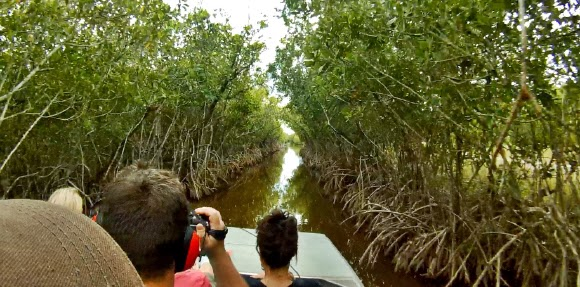 Airboat Tour in Everglades City entlang Mangroven, Florida
