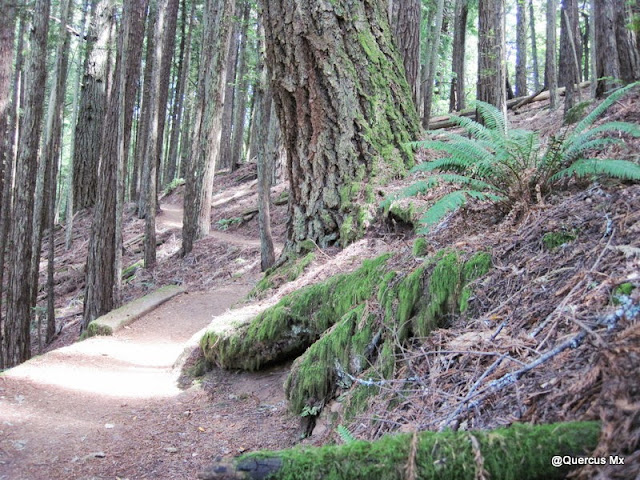 Trail Dipsea rumbo a Muir Woods National Park