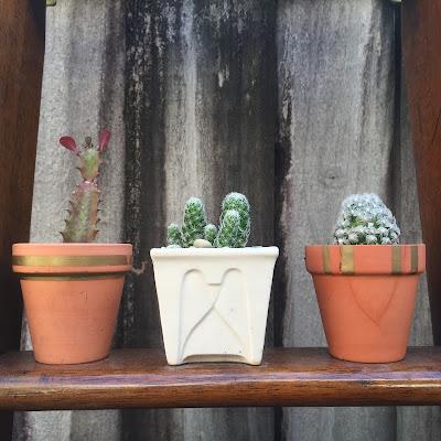 Euphorbia, Mammillaria, cactus, succulent, custom planters Miami, garden design Miami, xeriscape landscaping