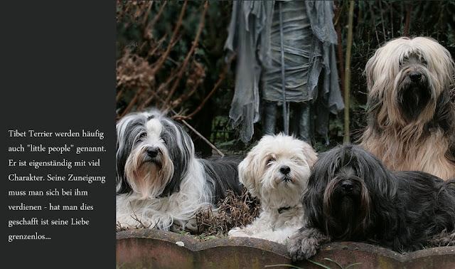 """Tibet Terrier werden häufig """"little people"""" genannt. Auf dem Foto ist Chiru mit seiner Familie zu sehen."""