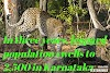 In three years, leopard population swells to 2,500 in Karnataka (india)