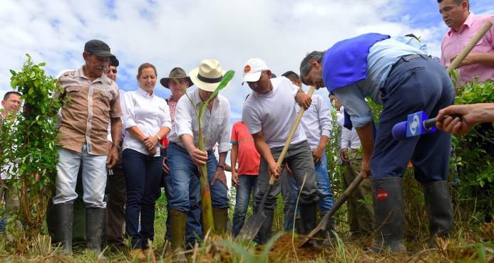 Colombia inicia programa de sustitución voluntaria de plantaciones de coca