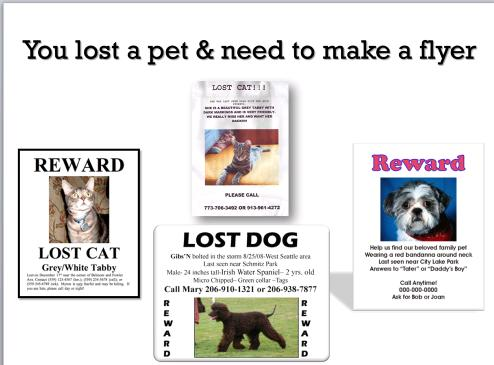 Lost Dog Template. 20 Best Lost Dog Flyer Templates Demplates. 9