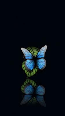 download besplatne slike za mobitele leptir