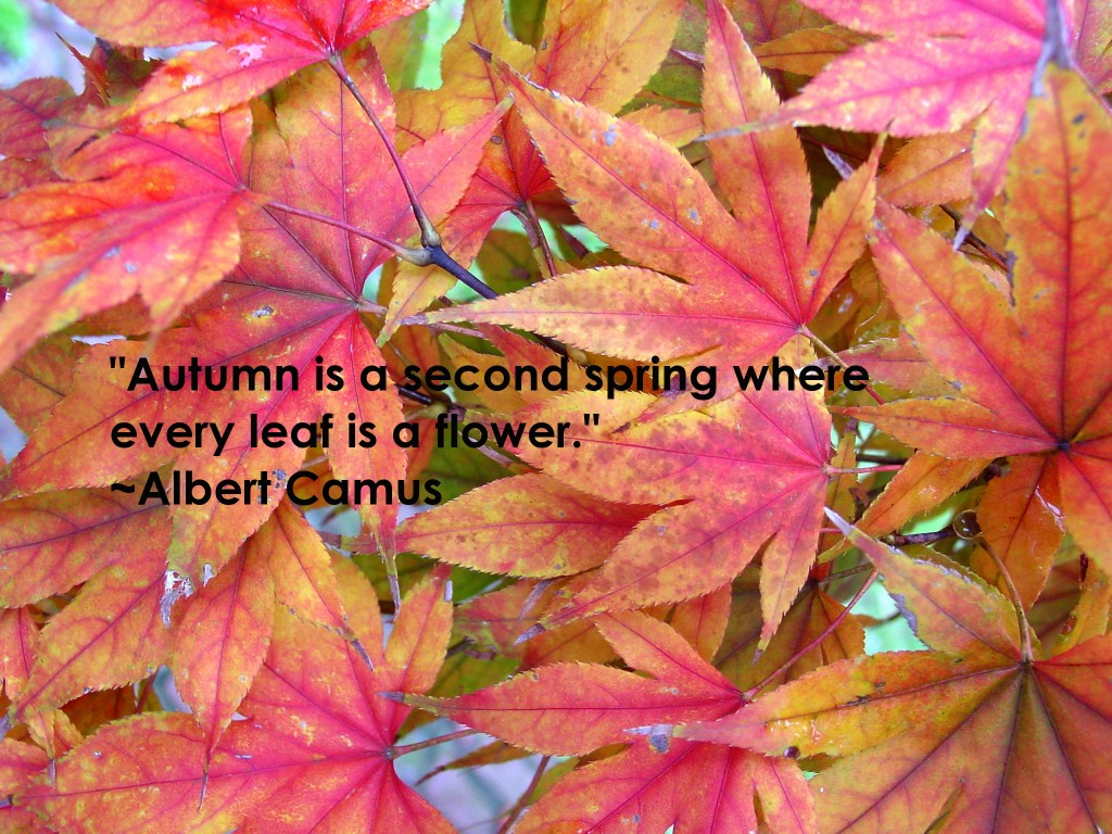Fall Quotes: Autumn Posters Picture