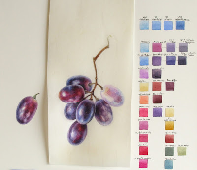 watercolour study of purple grapes on vellum with colour charts