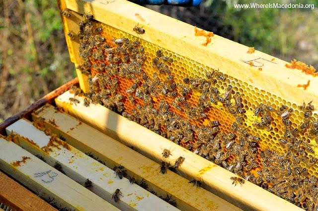 How Long Does Honey Last?