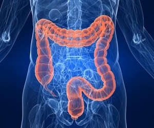 Large Intestine in a Body