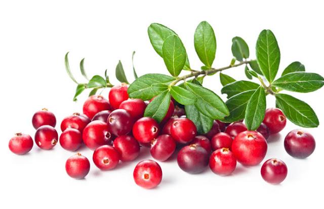 Manfaat buah cranberry bagi kesehatan