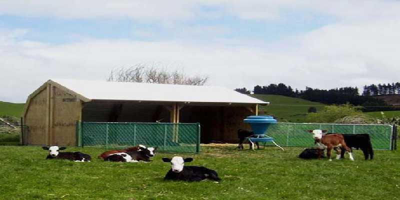 Open Yard Housing for Young Cattle designed by Architects and Consultants