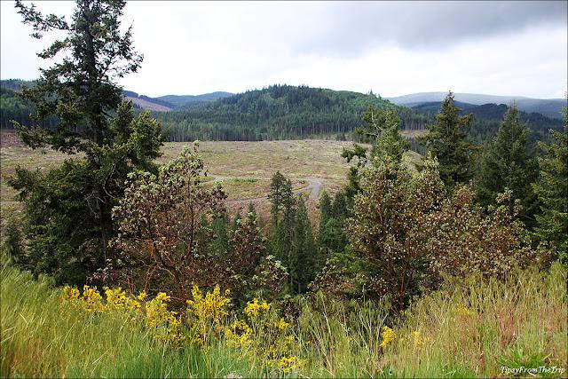 Scenic route: Mt.Rainier National Park, WA