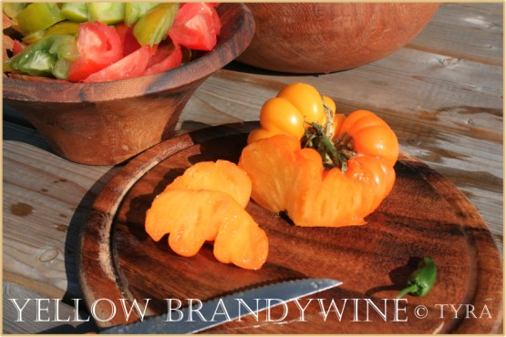 """Tomato Yellow Brandywine"""