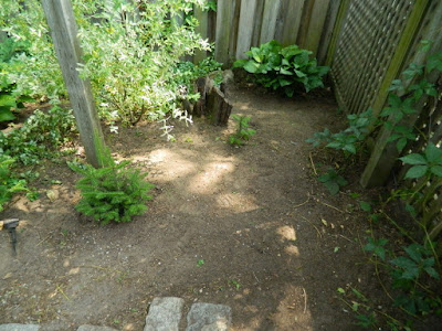By a Toronto Gardening Company East York Toronto Backyard Garden Cleanup After Paul Jung Gardening Services