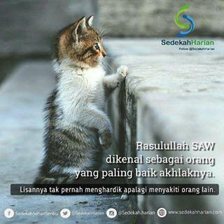 Gambar Kucing Yang Ada Nasehatanya