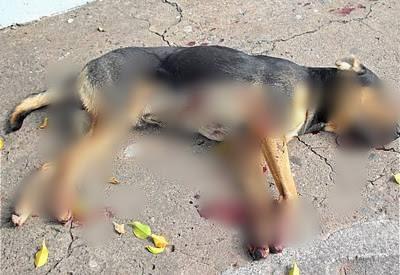 Dois são presos e um adolescente é apreendido por matarem cachorro a tiros