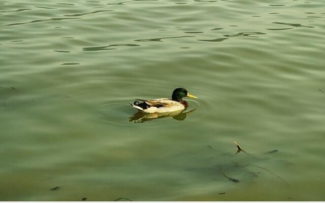 Kuş-Cenneti-Gölyazı