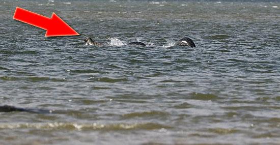 Nova foto convincente do Monstro do Lago Ness está intrigando o mundo - Capa