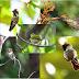 Conheça as 5 menores aves do Brasil