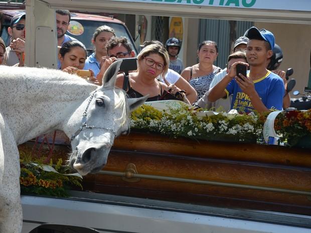 Cavalo se despede do dono morto em acidente