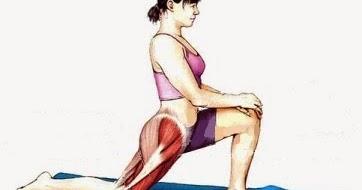 Анатомия человека строение мышц ног