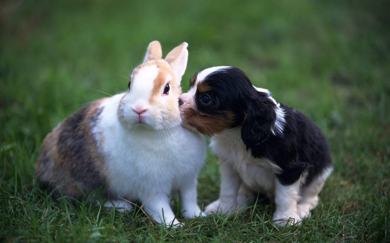 beutifull cute hd wallpapers baby kiss desktop dounlod full hd