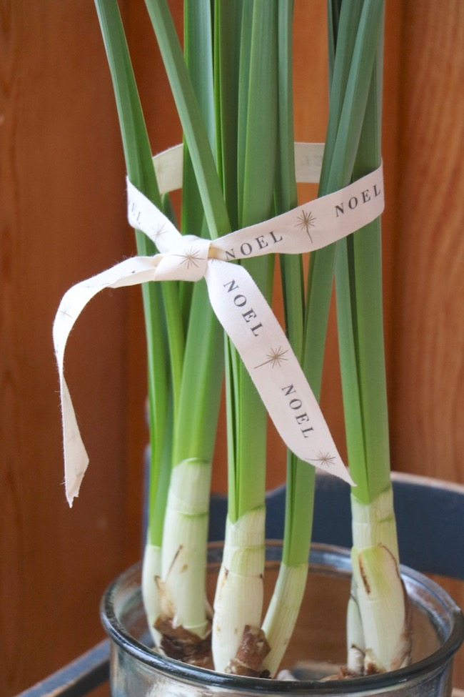 Christmas Kitchen Sunspace with Blooming Paperwhites Tied with Noel Ribbon