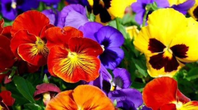 Γιορτή Λουλουδιών για 6η χρονιά  στο Γύθειο