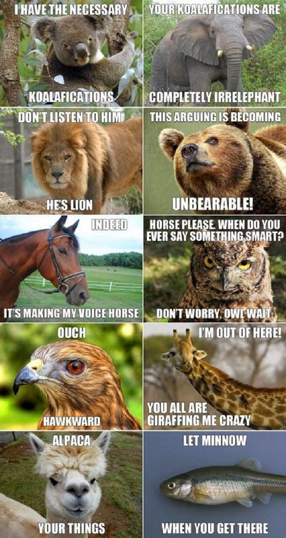 Funny Unbearable Animal Puns Collection Picture