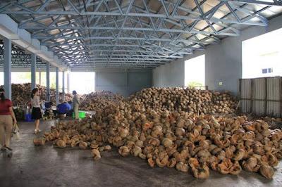 Sản xuất rượu dừa Đào Công Thành