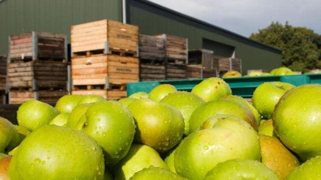 لماذا رفضت الدول العربية شراء محصول التفاح من السويداء؟