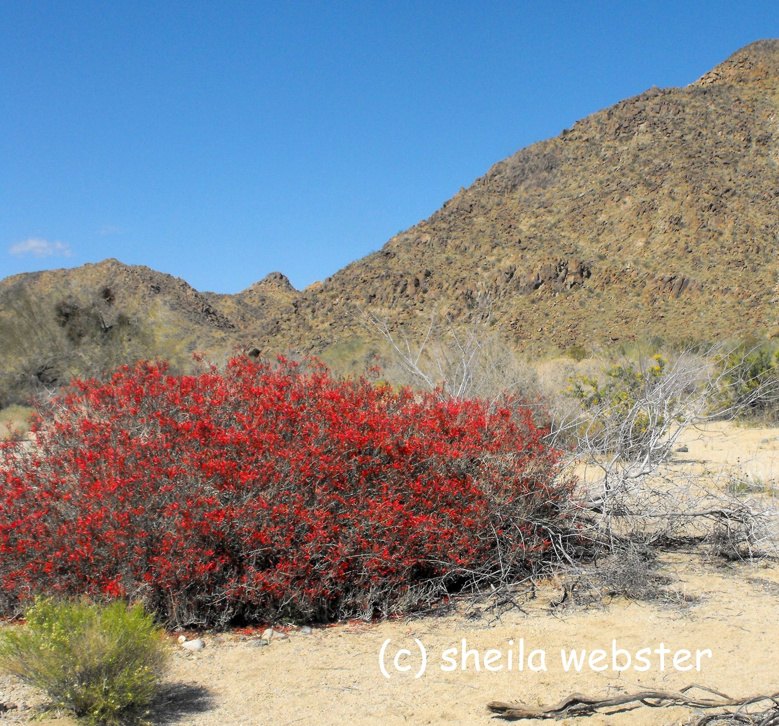 Mojave Desert Native Plants: We Love RV'ing: Joshua Tree National Park