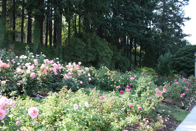 Roses in every shape and color uplift the spirit and invite wonder at the International Rose Test Garden in Portland.