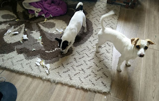 The puppies had their fun with the wrapping paper