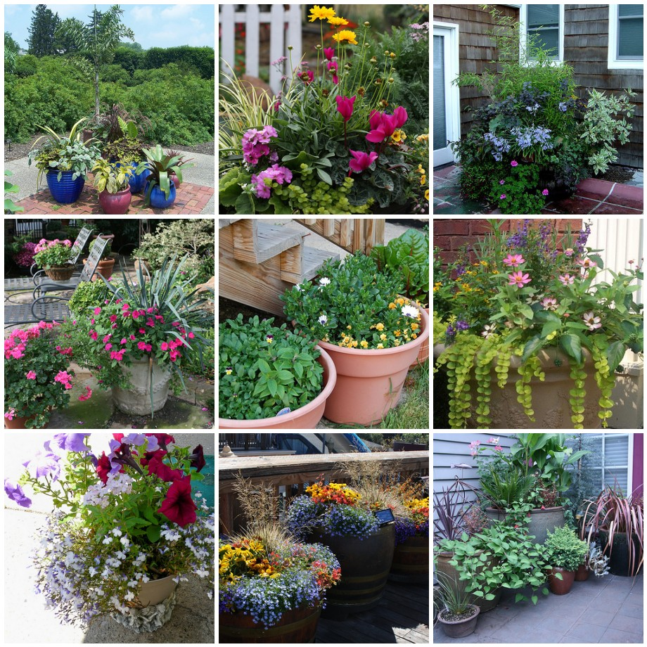 Patio Flower Pots Ideas. Arrangement Potted Arrangements. Flower .