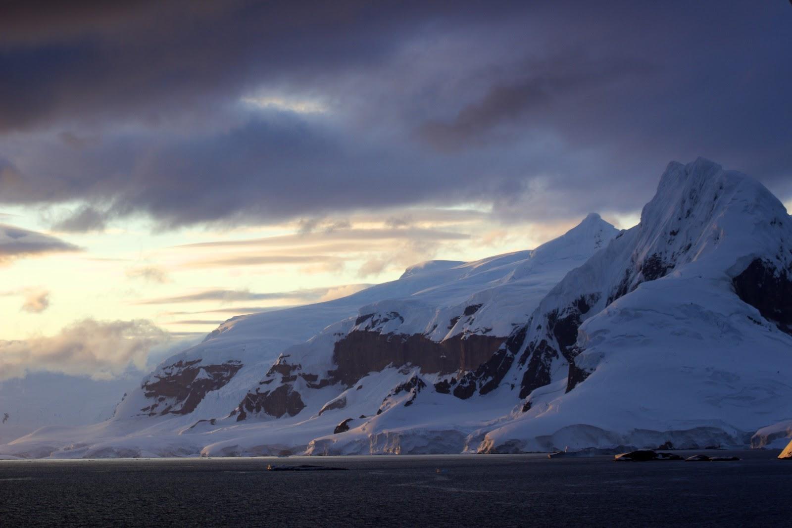 Pingvinsex i antarktis