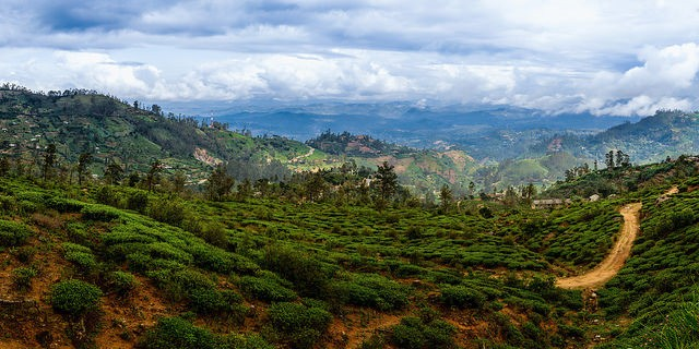 Tea country,Sri Lanka