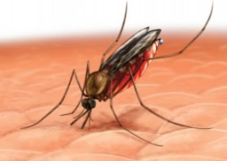 Cara Mengusir Nyamuk secara Tradisional