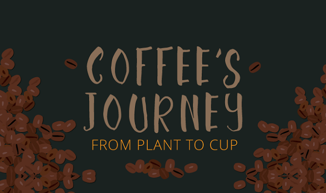 Coffee's Journey From Plant to Cup