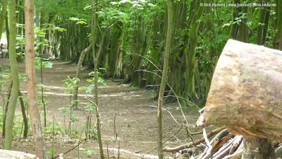 Niendorfer Gehege, Waldweg