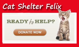 Help CAT SHELTER FELIX in Serbia ♥ PayPal: savage1@shaw.ca