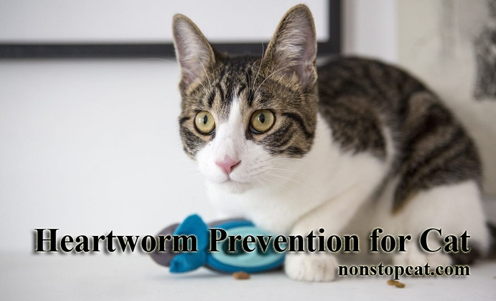 Heartworm Prevention for Cat