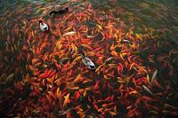 peluang usaha desa berkembang, bisnis desa berkembang, usaha budidaya ikan, budidaya ikan, bibit ikan, peternakan ikan, bisnis ikan, ikan, ternak ikan