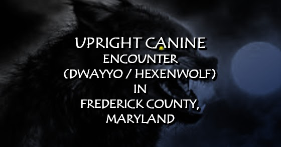 Upright Canine Encounter (Dwayyo / Hexenwolf) in Frederick County, Maryland