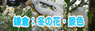 鎌倉:冬の花・景色