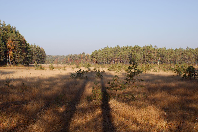 Suomaisemaa Teijon kansallispuistossa