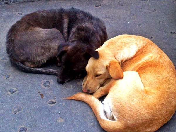 Dogs sleeping in the shape of a heart