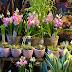 Sunday Flowers #258
