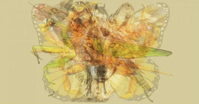 Hewan Pertama yang Anda Lihat, Menentukan Kepribadian Anda